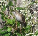 Humming bird album 001
