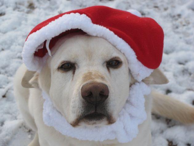 Austin Christmas Hat 1